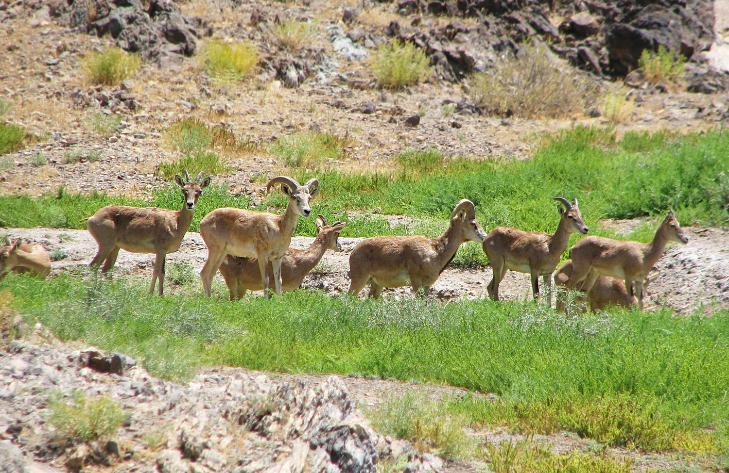 Khar Turan National Park or Touran Wildlife Refuge - Iran