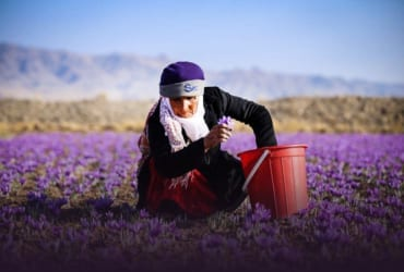 Iran Saffron & Barberry Tour