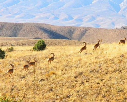 Golestan National Park – Hiking and Trekking Tour