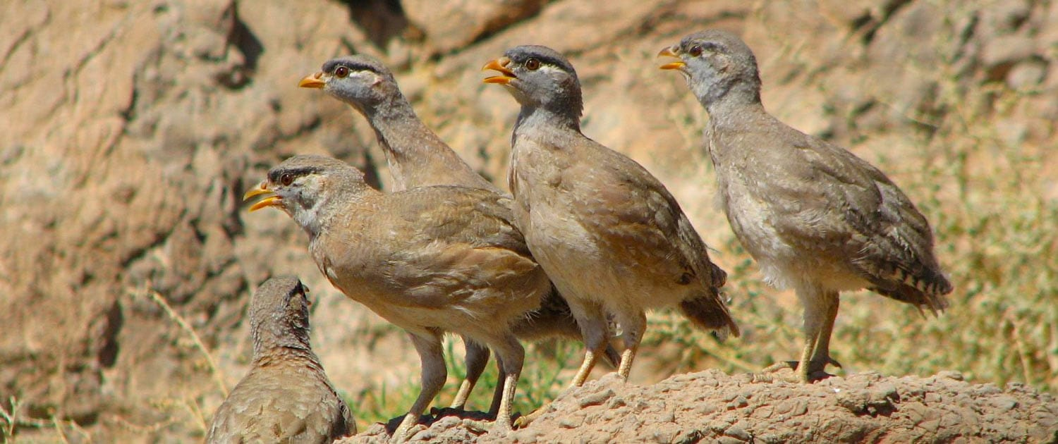 Iran Bird Watching Tours – Iran Birding Tours