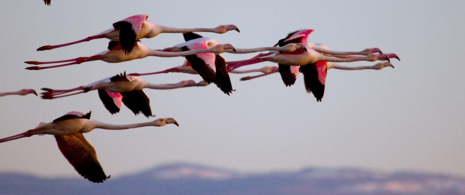 Iran Bird Watching Tours Iran Birding Tours