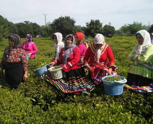 Iran Tea Tasting Tour