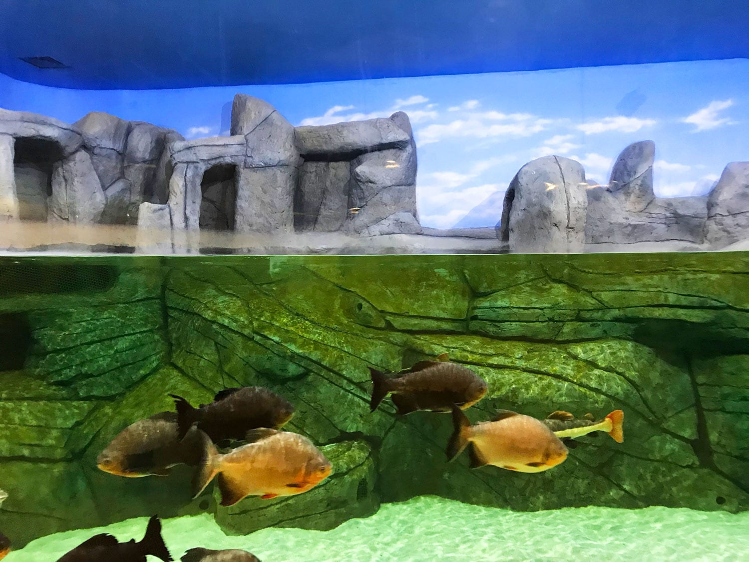 The Largest Aquarium Tunnel in Iran Opens in Bandar-e Anzali - SURFIRAN