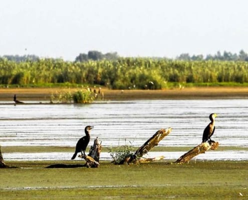 The Wonderland of Anzali Wetland - Visiting Anzali Lagoon - SURFIRAN